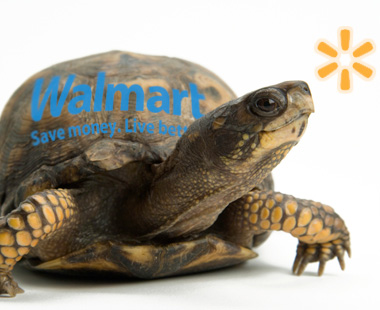turtle with walmart logo