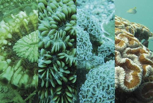 Coral mashup.