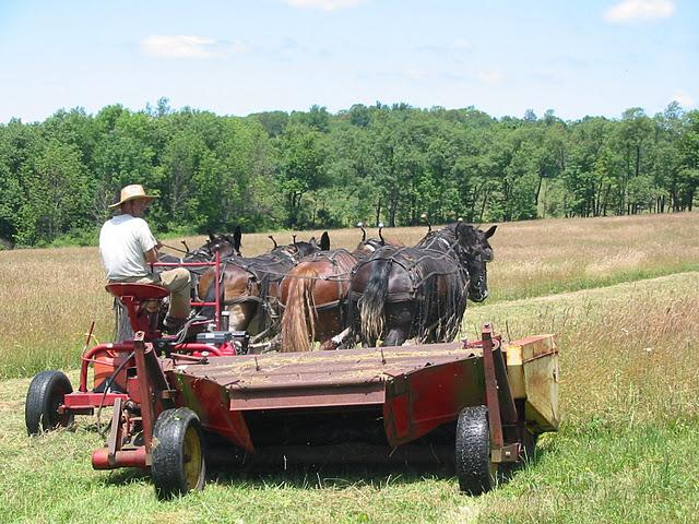 hay mowing