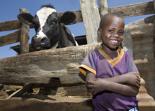 boy with cow
