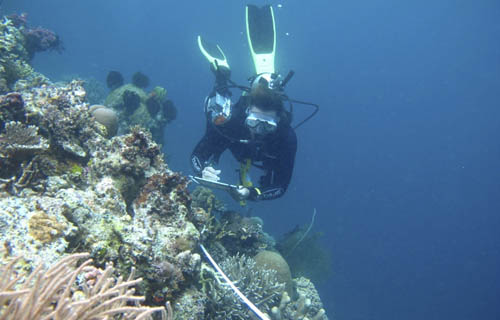 Joanne Wilson surveying coral reefs in Raja Ampat