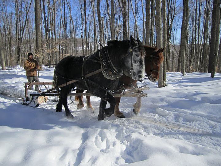 draft horses in winter