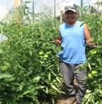 Rodrigos Tomatoes farmworker