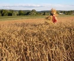 local grains
