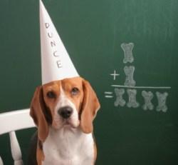 dog-dunce-cap-hp