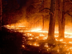 Blazes like last year's Whitewater Baldy Complex fire in New Mexico could make that part of the country inhospitable to trees.