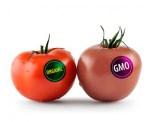 organic-gmo-tomato-carousel