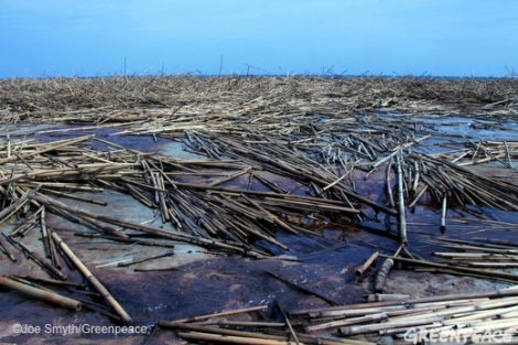 Oil and reeds washed up by Hurricane Isaac on West Ship Island, Mississippi, September 4, 2012
