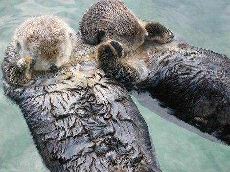 otters 07