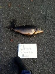 Fish Storm Surge climate change