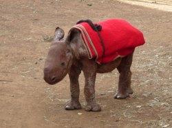 reddit_baby_rhino