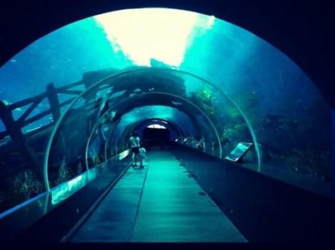 S.E.A.-Aquarium-2-537x402