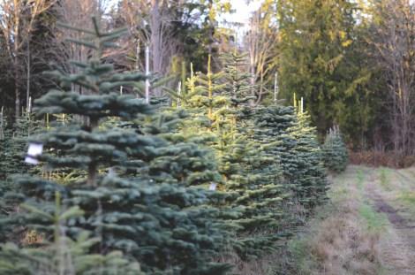 12-12-13christmastree