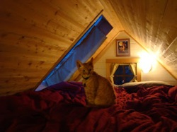 Lina's tiny home includes a sleeping loft that she shares with her cat, Raffi.