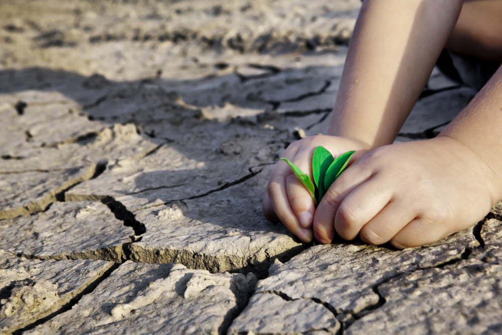child planting seedling in dry earth