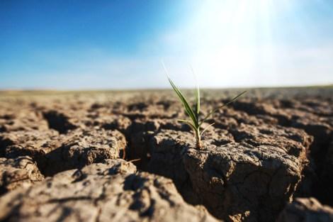 Drought eradicates the green