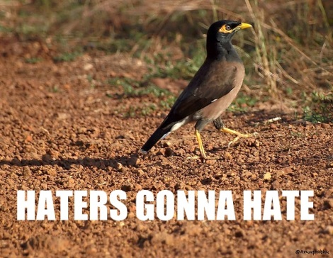 haters_myna