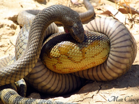 Good thing someone found the snakes before they got big.