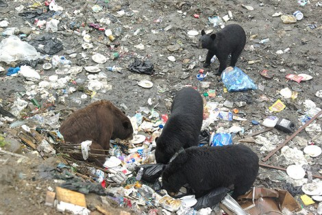 This is actually a dump in Canada. Really. With bears.