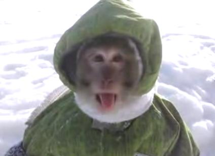 Hoppediz/ /Monkey Winter