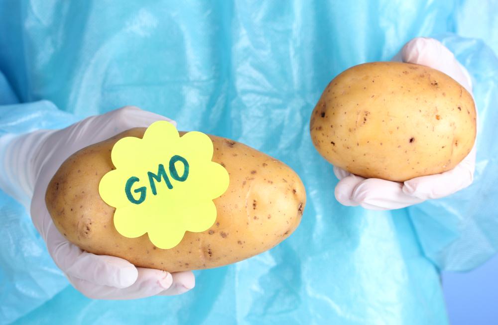 genetically modified food potato