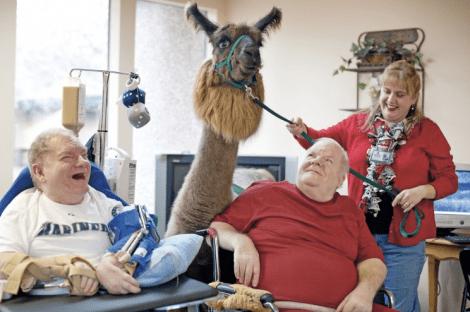 therapy_llama