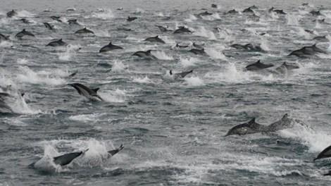 dolphins_antonio_ramirez