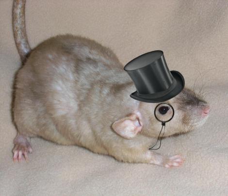 fancy_rat