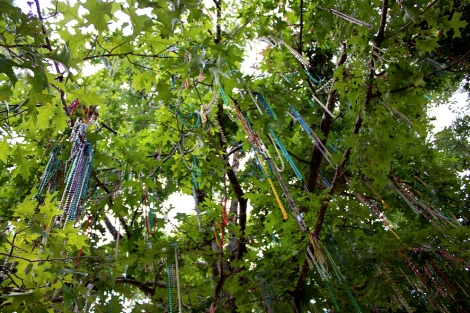 Mardi Gras beads hanging in a tree