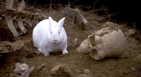 python_bunny
