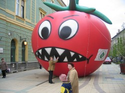 giant tomatoe