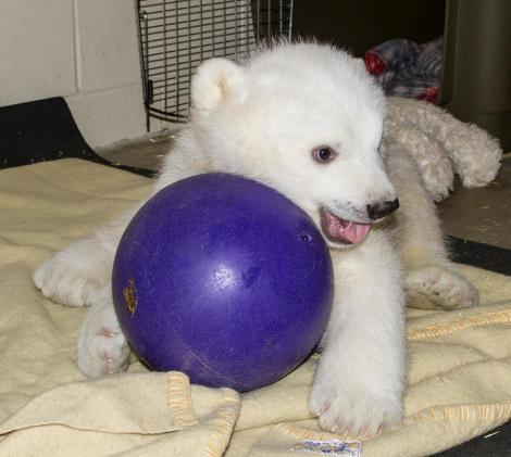 kali_bear_ball