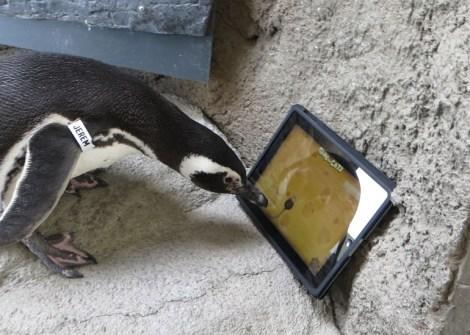 penguin_ipad