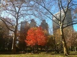 trees in Philadephia