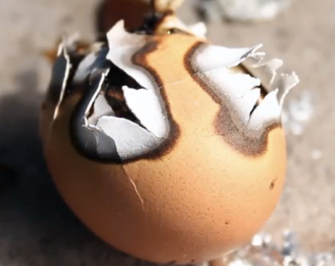 Holy crap look what it did to this egg
