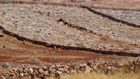 Epic drought in Syria's farmland, shown here, may have inflamed civil unrest.