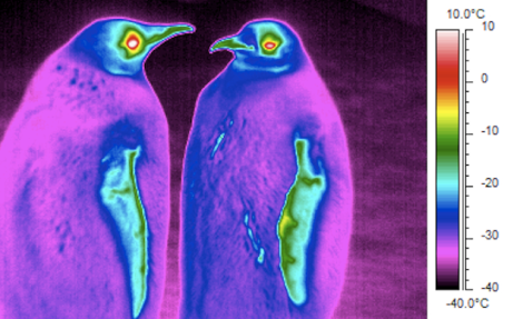 thermal_penguins