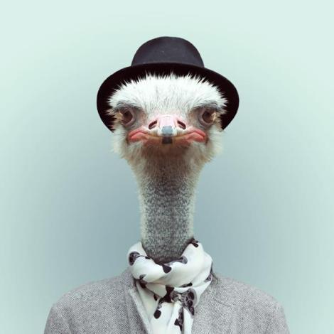 yago_partal_ostrich
