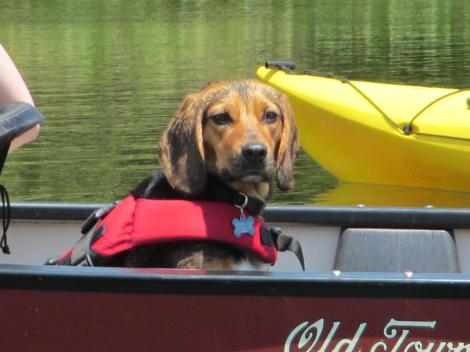 canoe_dog