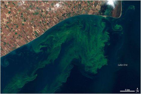 lake erie algae 2011 EARTH OBS