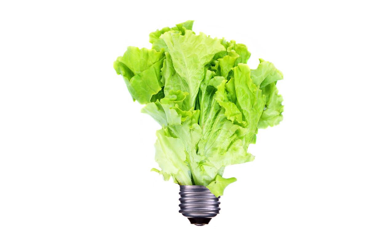 a lettuce light bulb