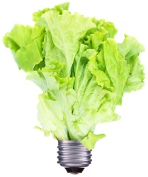 a lettuce light bulb