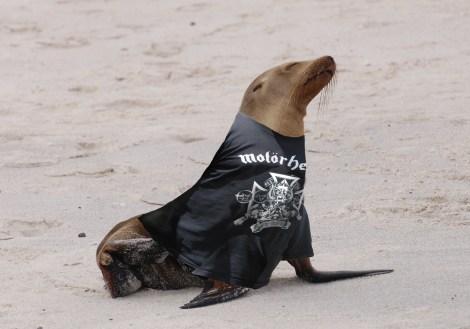 motorhead_sea_lion