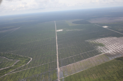 Where the doughnuts come from: palm oil plantation on recently cleared peatland rainforest.
