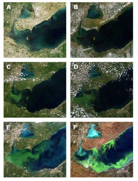 progression of algae pnas