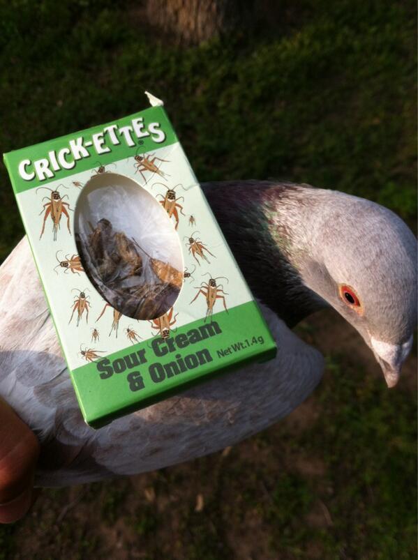 ricket_pigeon