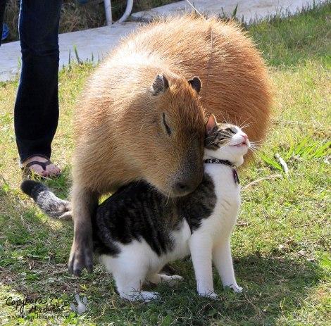 capybara_pals_1