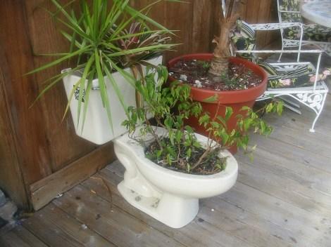 toilet_planter