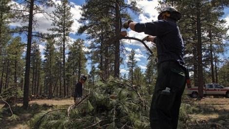 """The fire crew builds a """"slash pile."""""""