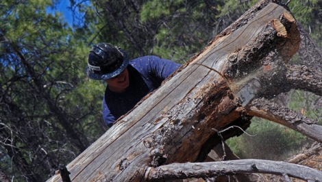 Firefighting greenhorn Jake Hess, 23, practices his chainsaw control on a fallen tree.